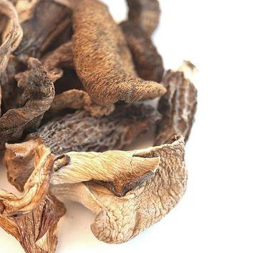 Mushroom Jungle Blend
