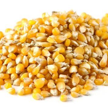 Bulk Non-GMO Ladyfinger Popcorn, 50 Lb. Bag