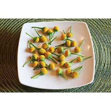 Edible Flower Buzz Button 50 Count