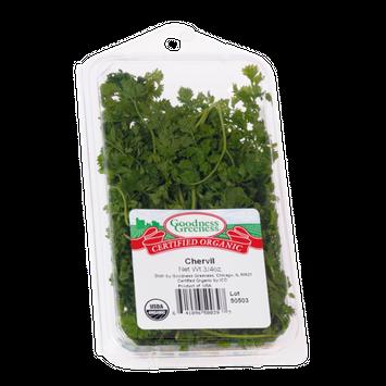 Goodness Greeness Chervil Herbs - Organic
