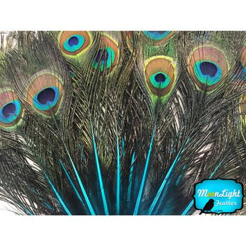 10 Pieces - Turquoise Blue Mini Natural Peacock Tail Body Feathers With Eyes