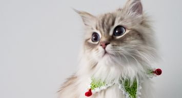 Gifts That Are Extra Nice for the Cats and Cat Lovers on Your List