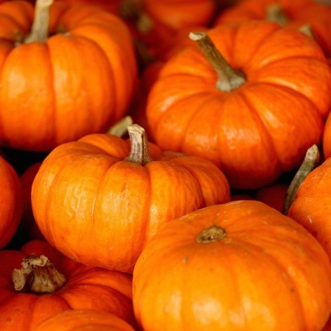 What to Bring: Trick-or-Treating With Your Kids