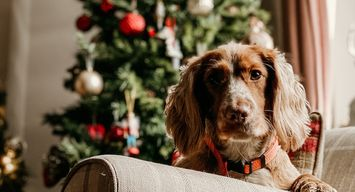 Gifts for Dogs and Dog Lovers Alike That Give Back
