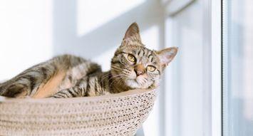 Top-Rated Cat Furniture