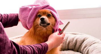 Meet the Four Women Behind Pride+Groom, a Beauty Brand for Dogs