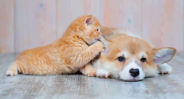 Pawsome Purina Products That'll Make Your Four-Legged Friends Love You Fur-Ever