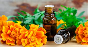 The Best Natural Insect Repellents