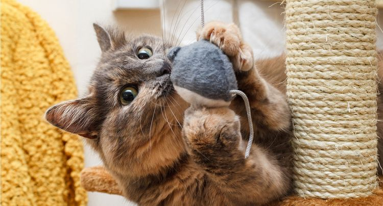 5 Influenster Cat Owners We Love & The Toys They Swear By