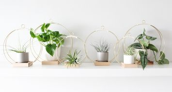 Air Plants, Entrepreneurship, and Decor: Meet the Founder of Braid and Wood