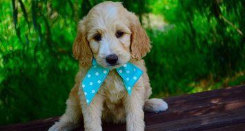 Good Dog! 5 Rewarding Treats for Your Puppy