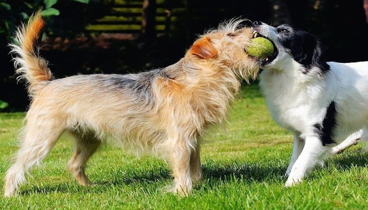 Best Grooming Products for Dogs