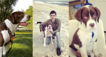7 Dog Products to Keep a Pup Happy from Co-Founder Aydin Acar
