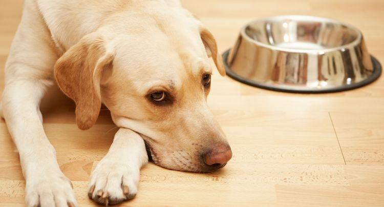 The Best Dry Dog Foods