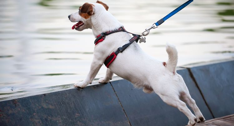 The Best Dog Harnesses for Your Furry Friend