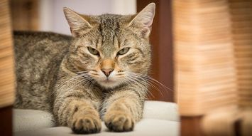 5 Yummy Treats for Your Cat