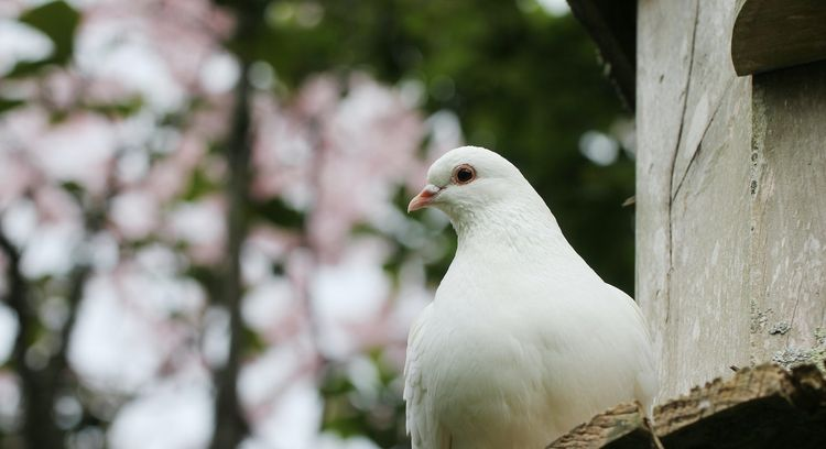 3 Reasons Why Doves Are Our Official Mascot of 2020