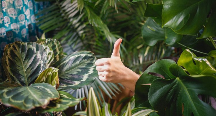 How to Start an Indoor Garden and Care for Your House Plants