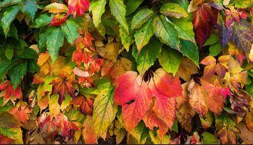 Influenster Autumn Essentials