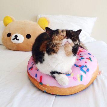Instagrammers to Follow: Kitten Edition