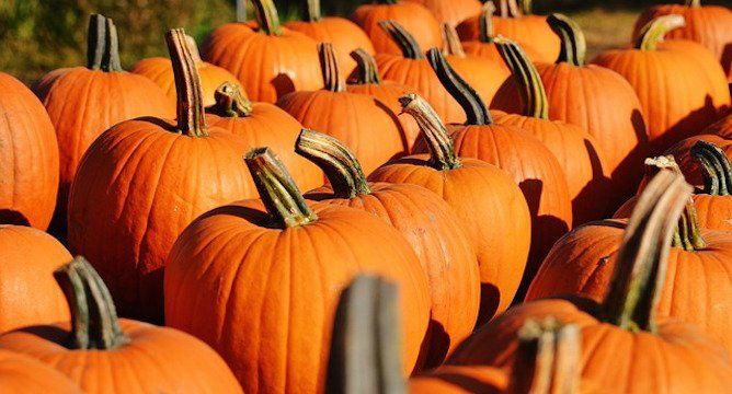 """<p>We are living in the era of pumpkin spice. When <a href=""""https://www.influenster.com/reviews/starbucks"""" target=""""_blank"""">Starbucks</a> unveiled the Pumpkin Spice Latte twelve years ago, they had no idea the impact it would have on our palettes and our hearts. Today there are hundreds of pumpkin spice products on the market. We've rounded up some of the greatest available.</p> <p>Do you have a favorite pumpkin spice product? Let us know about it in the comments!</p> <p></p>"""