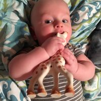 Vulli Sophie the Giraffe Teether uploaded by Victoria M.