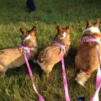 Four Paws Comfort Control Harness uploaded by Lindsey T.
