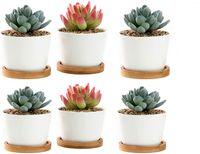 VKPLITE 6Packs Succulent Planter, White Mini 3.15 inch Ceramic Flower Planter Pot with Bamboo Tray