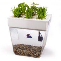 Back to the Roots Aquafarm Fish Tank