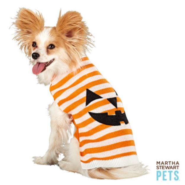 Martha Stewart PetsA Pumpkin Face Sweater