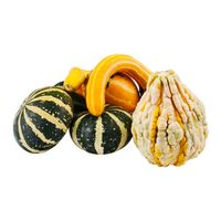 Gourds Mini Shellacked - 8 CT