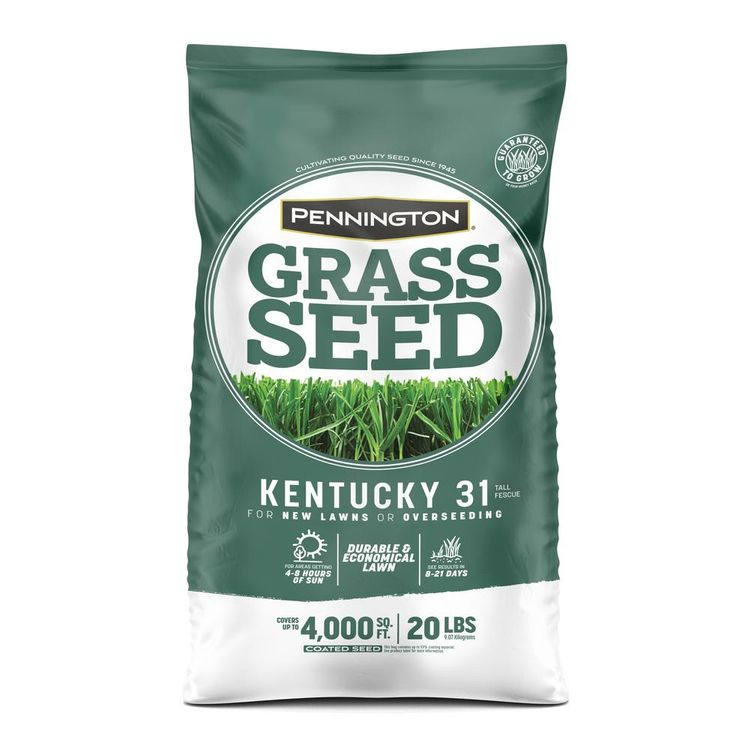 Pennington 20 lbs. KY 31 Fescue Grass Seed