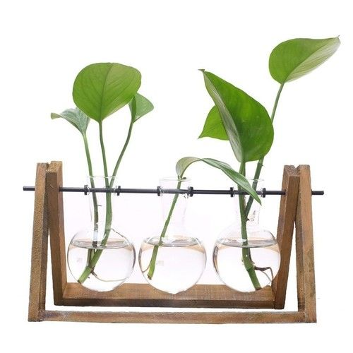 TOOGOO Plant Terrarium with Wooden Stand Glass Vase Holder for Home Decoration,Scindapsus Container (3 Terrariums)