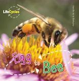 Qeb Publishing Egg To Bee