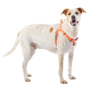 Arcadia Trail™ Stink-Free Dog Harness
