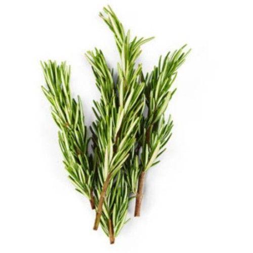 Fresh Rosemary, .75 oz