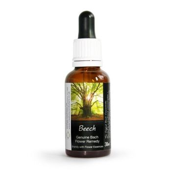 Beech Bach Flower Remedy Large 30ml. Genuine Traditionally Made Essence