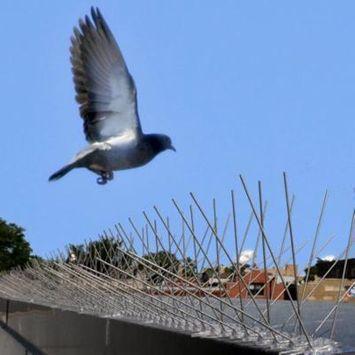 Bird-X Stainless Steel Bird Spikes, 50'