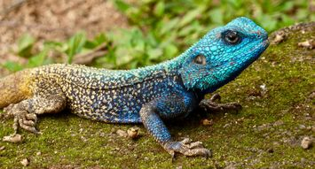 4 Ways to Keep Your Reptile Happy