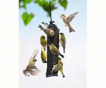Songbird Essentials Finch Magic Thistle Sack