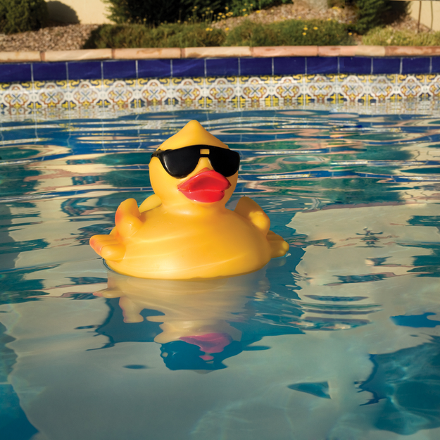 Swim Time Derby Duck Pool and Spa Chlorinator