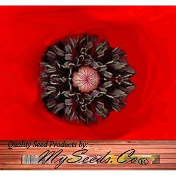 10,000 x RED POPPY HEAVY BLOOMER flower Seeds - Europe from England to Greece - Papaver rhoeas - Zones: 3-9 - By MySeeds.Co