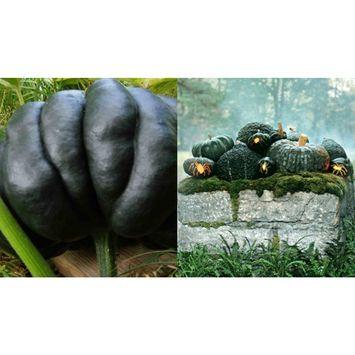 HEIRLOOM NON GMO Black Japanese Pumpkin 10 seeds