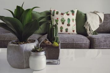 It's National Houseplant Day!  Get Influenster and Plant Guru Tips for How To Celebrate