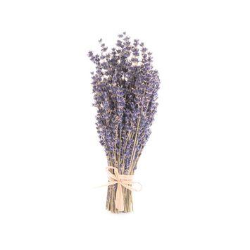 Terre Bleu Dried Lavender Bouquet