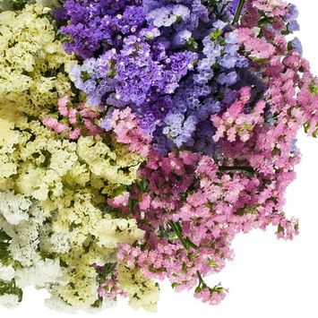 Natural Fresh Flowers - Assorted Statice, 200 Stems