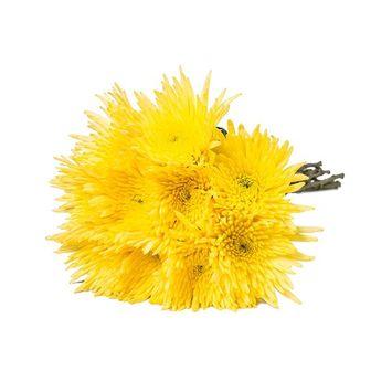 Farm Fresh Natural Yellow Spider Mums - Yellow - 60 Stems