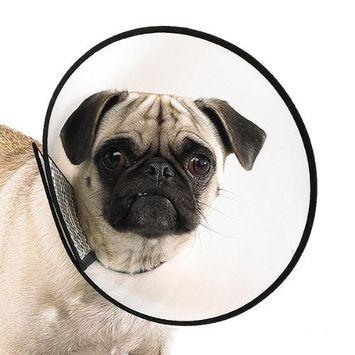 Elizabethan Dog Collar