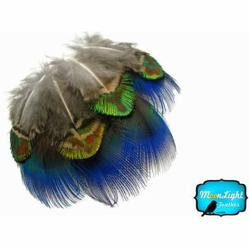2 Dozen - Iridescent Blue And Green/Gold Peacock Plumage Loose Feathers