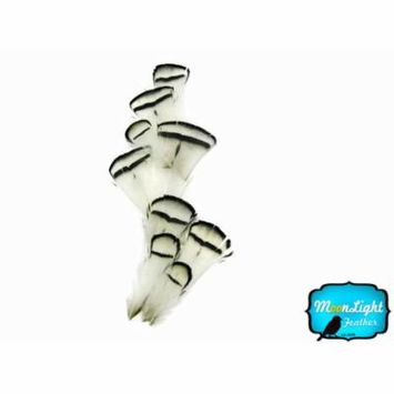 1 Dozen - Natural White Lady Amherst Pheasant Tippet Feathers